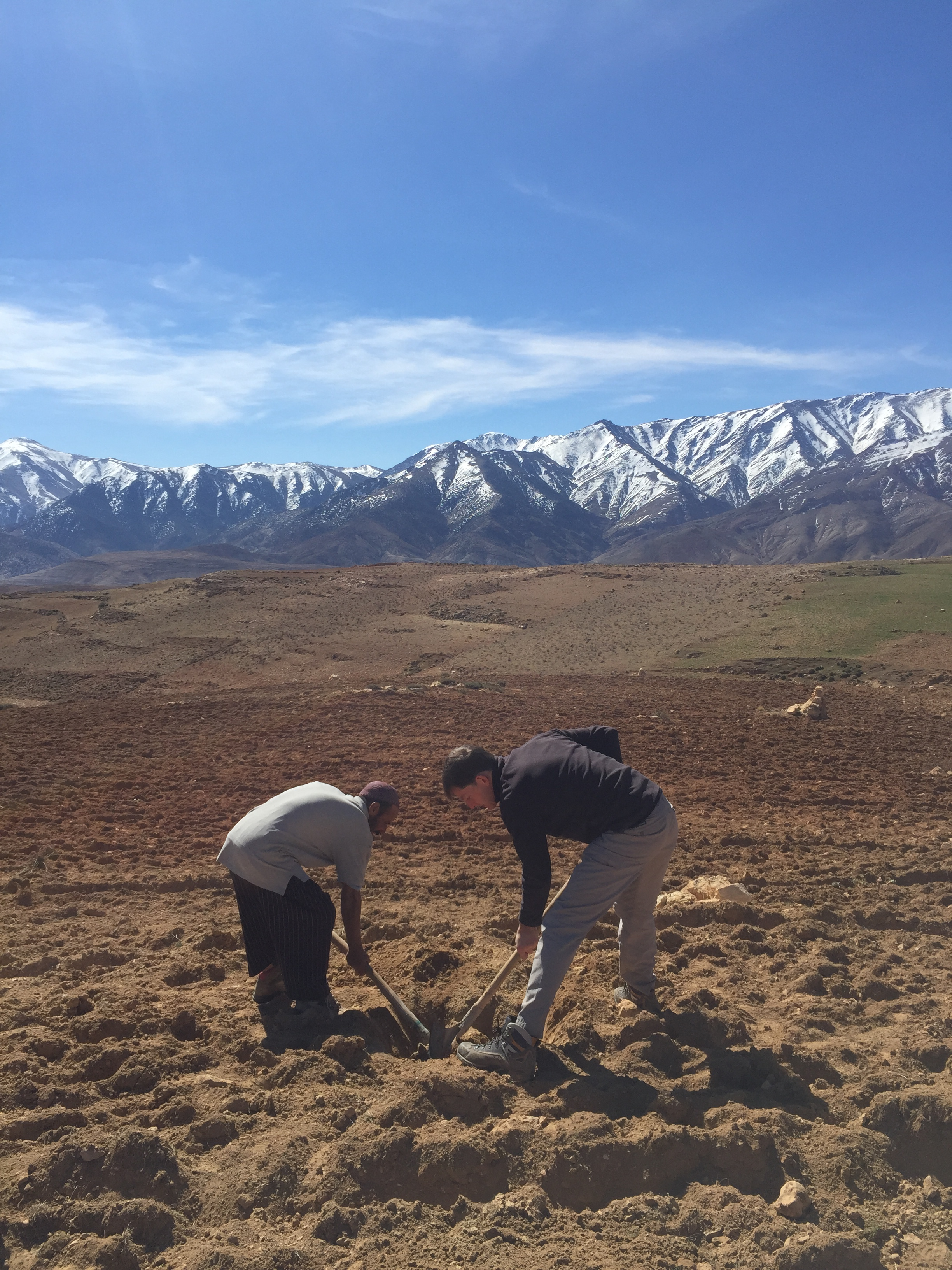 planting almond trees in the atlas mountains in morocco, adventurer alice morrison